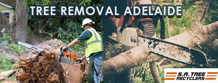 Tree Removal Adelaide.jpg